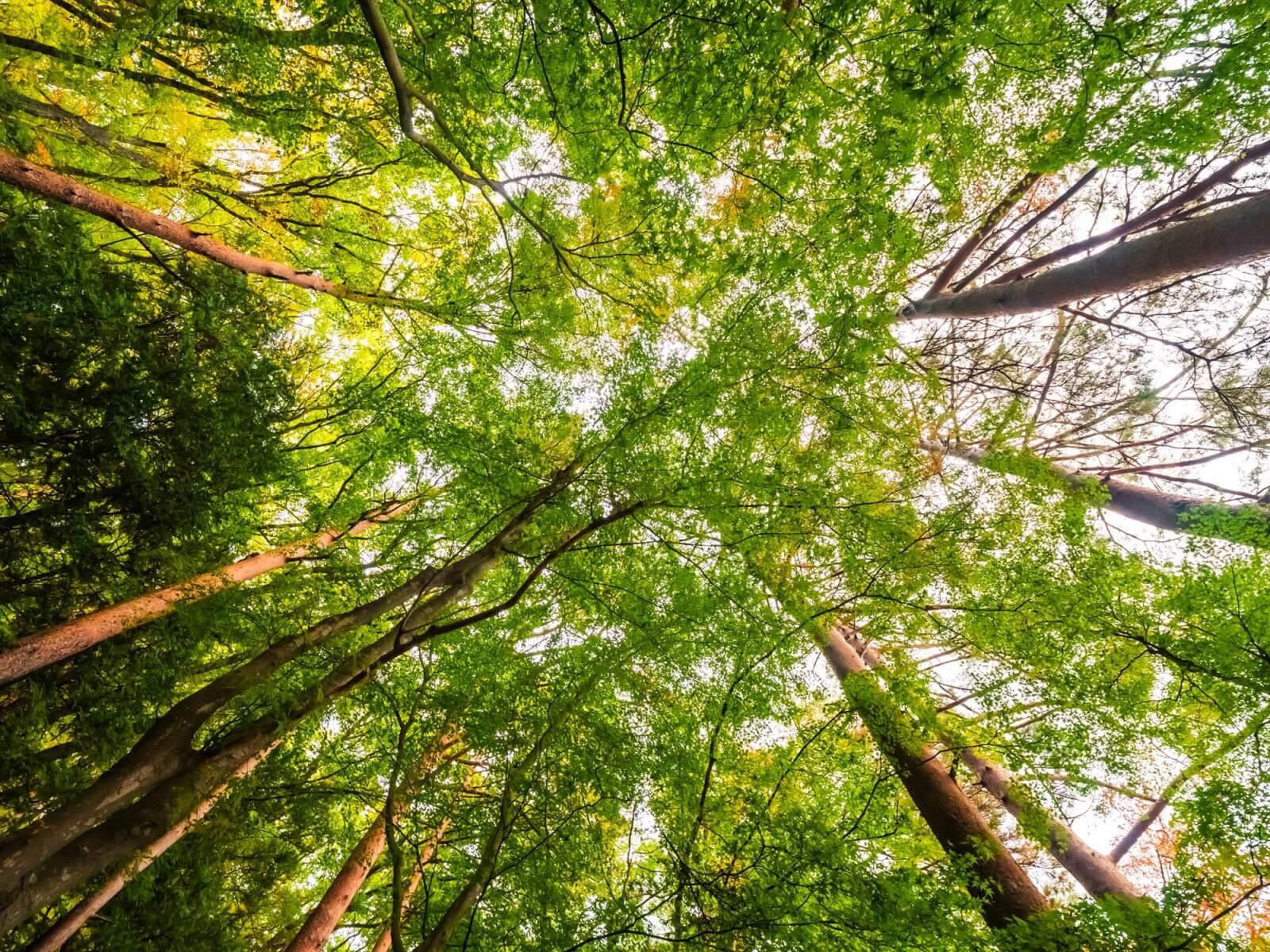 Você conhece as florestas de reflorestamento