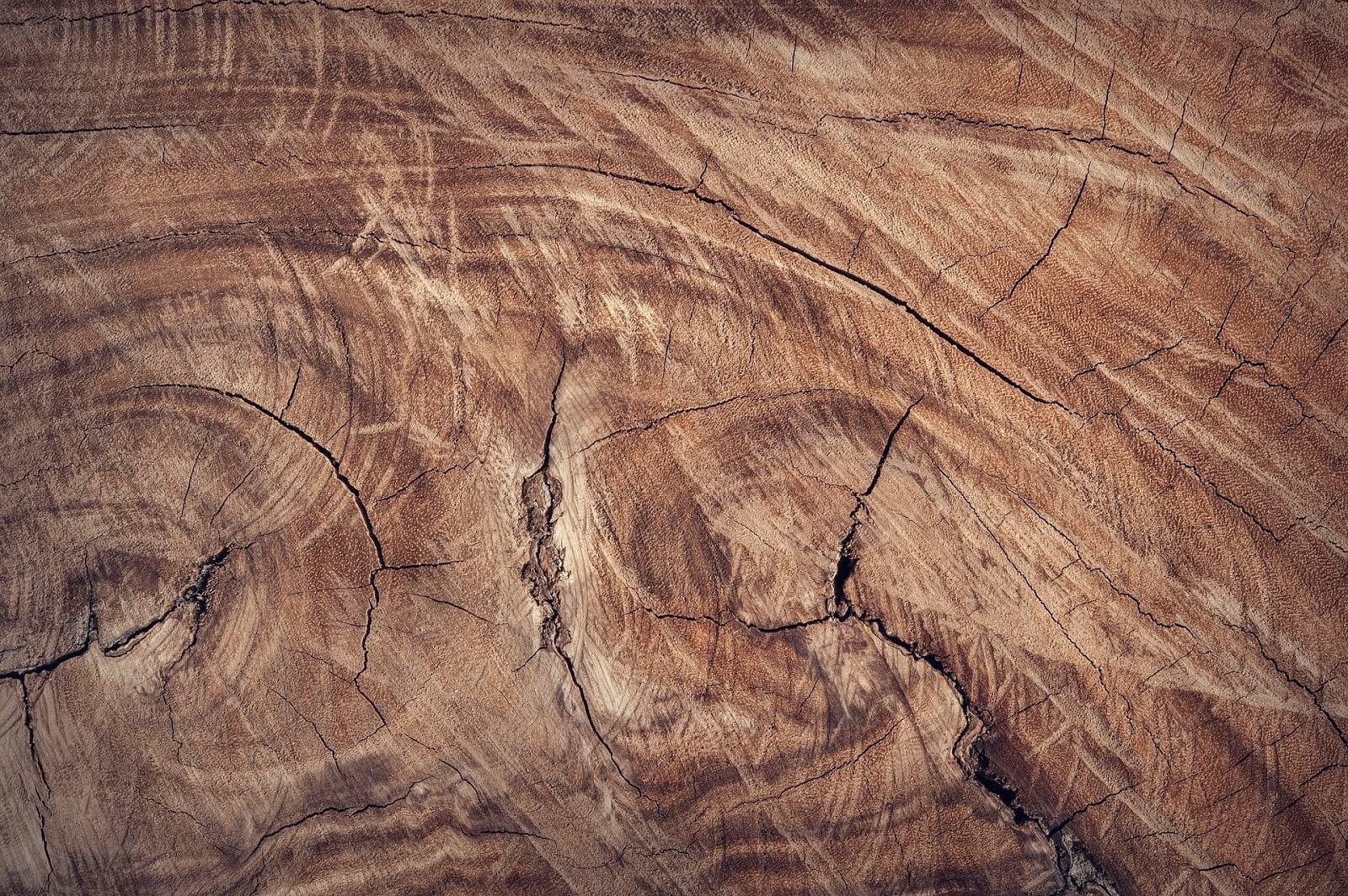 Como o clima influencia a aparência e a qualidade da madeira?