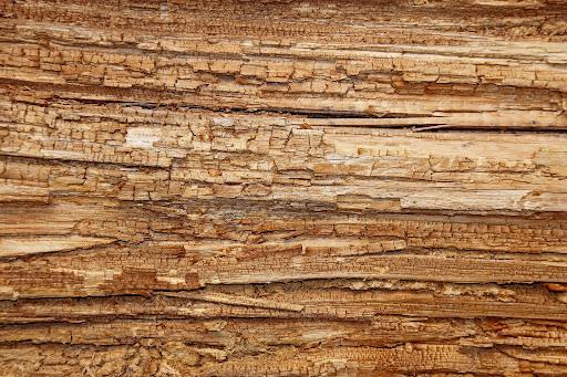 Cuidados para evitar que a madeira apodreça