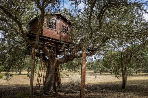 Dicas para construir uma casa na árvore com segurança